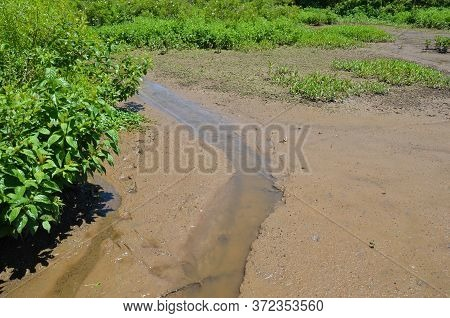 River Or Stream In Muddy Water With Plants In Wetland