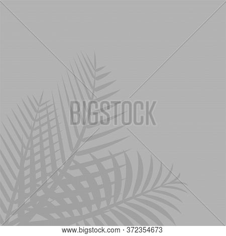 Coconut Leaf Grey For Background, Shadow Tree Palm Leaves On Wall, Floral Natural Leaves Shadow Gray