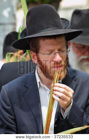 BNEI BRAK - SEPTEMBER 22: Religious young red-bearded Jew chooses ritual plant Lula before Sukkot September 22, 2010 in Bnei Brak, Israel