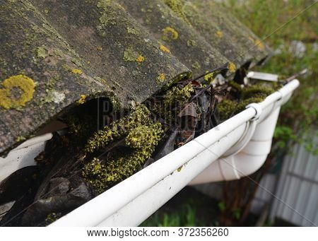 Clogged Roof Gutters And Downspout With Old Leaves, Dirt, Moss And Lichen Causes Roof Leaks And Dama