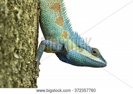 Beautiful Reptile Crawing Down The Tree