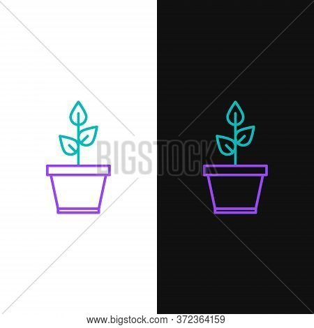 Line Plant In Pot Icon Isolated On White And Black Background. Plant Growing In A Pot. Potted Plant