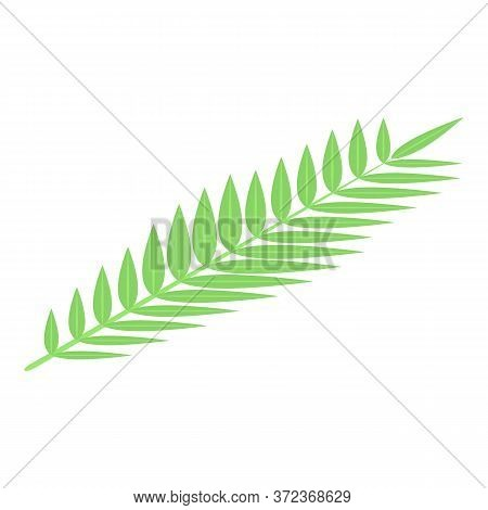 Coconut Tree Leaf Icon. Isometric Of Coconut Tree Leaf Vector Icon For Web Design Isolated On White