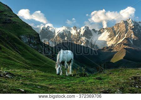 View Of The Highest Caucasus Mountains, White Horse Grazes In Mountain Meadows, White Horse, Svaneti
