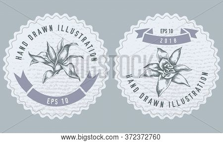 Monochrome Labels Design With Illustration Of Guzmania Stock Illustration