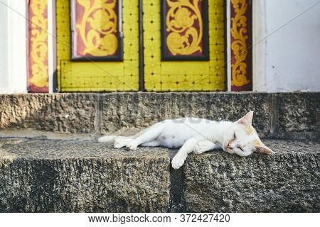 Cute Cat Sleeping On Stairs In Front Of Colorful Old Door In Sri Lanka.
