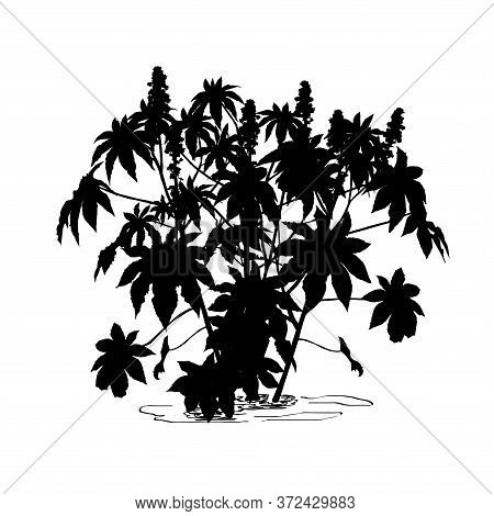 Silhouette Of Castor-bean Tree (ricinus Communis L.) With Large Flowers, Black Vector Image On White