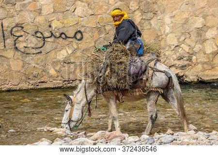 Ouarzazate/morocco - April 18 2017: Moroccan Farmer Sitting On A Donkey And Wading Through A Stream'