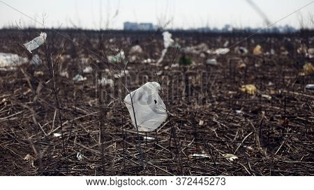 View Of A Garbage, Plastic, Bags Spread And Discarded In The Dry Grass In Field, In Day Light. Conce