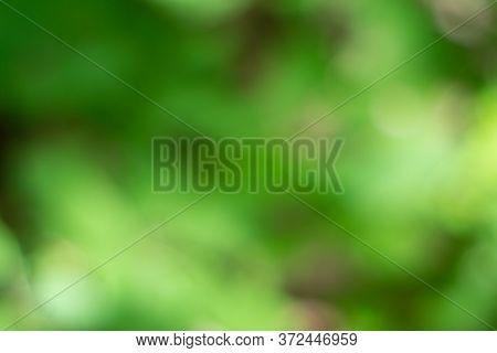 Blurred Background Of Green Leaves. Bokeh. Perfect Background For Your Creativity. Background With B