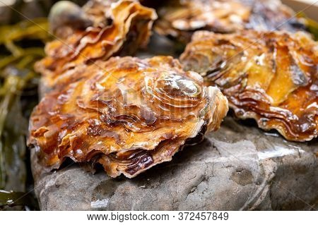 Fresh Zeeuwse Creuse Pacific Or Japanese Oysters Molluscs On Fish Market In Netherlands