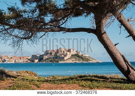 The Ancient Citadel Of Calvi In Corsica Surrounded By The Mediterranean Sea Under A Blue Sky And Fra