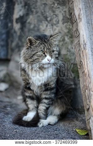 Homeless Tabby Cat On The Street Close Up