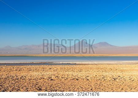 Cejar Lagoon And Licancabur Volcano In Atacama, Chile.