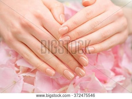 Manicure, beauty nails. Beautiful Woman's hands, Spa and Manicure concept. Female hands with beautiful natural pink french elegant manicure. Soft skin, skincare concept. Salon. Treatment.