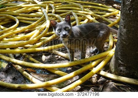 A Cat With A Strange Look In A Yellow Pipe