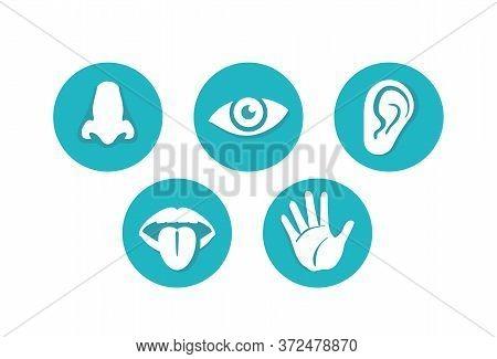 Five Senses - Touch, Sight, Hearing, Smell And Taste - Basic Human Sensing Organs - Eye, Mouth, Ear,
