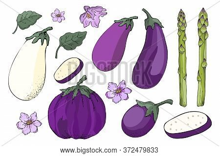 Vector Vegetable Set. Sketch. Eggplant And Asparagus.