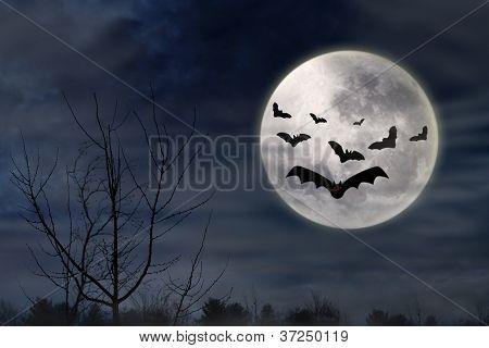 Bats Flying In The Dark Night