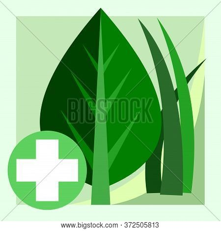 Medicinal Herbs. Vector. Natural Traditional Medicine. Banner, Graphic Button For The Site Menu. Sym