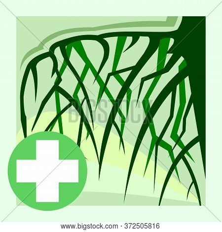 Medicinal Roots. Vector. Natural Traditional Medicine. Banner, Graphic Button For The Site Menu. Sym