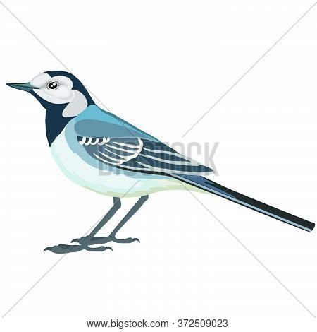 Wagtail Bird In Natural Style In Blue Color, Isolated Object On White Background, Vector Illustratio