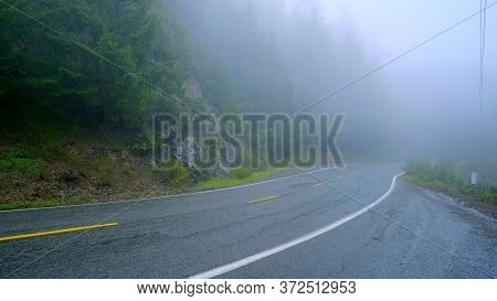 Lonesome Road In The Mist Leading Through The Redwoods National Park