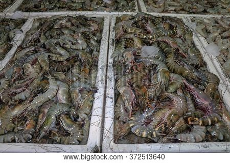 Pattern Of Fresh Shrimps Selling On A Seafood Counter In Jimbaran. Pasar Ikan Kedonganan - Bali Beac