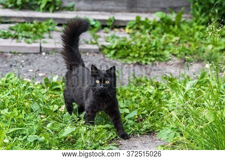 Black Kitten On The Grass Of A Home Yard Close Up