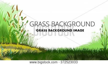 Yellow And Green Grass Background Vector Isolated. On A White Background. A Small Hill, A Lush Meado