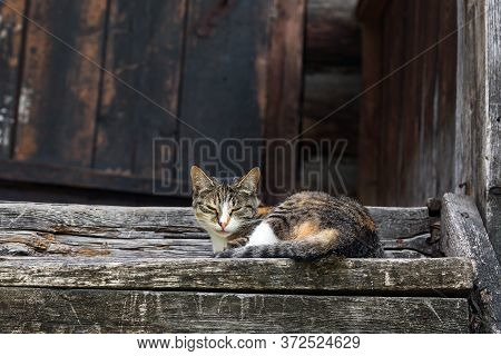 A Multi-colored Kitten Basks In The Sun On The Wooden Steps Of An Old House
