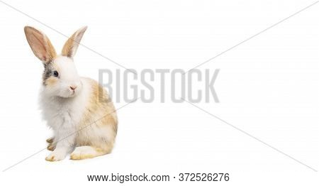 Brown And White Rabbit Animal Small Bunny Easter Is Sitting And Funny Happy Animal Have White Isolat