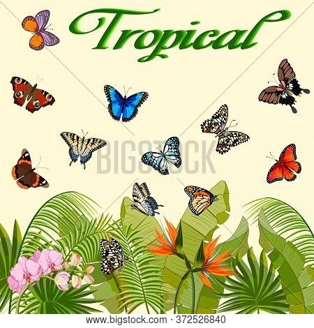 Illustration With Tropical Plants And Butterflies.colorful Butterflies And Tropical Plants In Vector