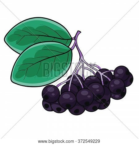 Handful Of Black Mountain Ash With Green Leaves, Cartoon Illustration, Isolated Object On A White Ba