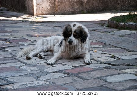 Escaping From The Hot Summer Sun, A Stray Dog Lay In The Shade On The Cool Stones Of The Pavement On