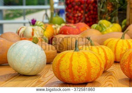 Bright Ripe Orange White Pumpkins Harvesting A Farm Crop. Fresh Pumpkin Vegetable On A Wooden Table,