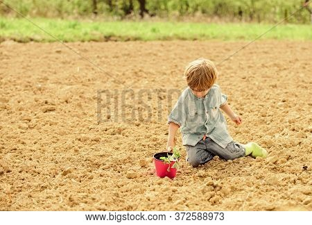 Child Having Fun With Little Shovel And Plant In Pot. Planting In Field. Planting Seedlings. Little