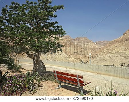 Bench In The Shade Of A Young Sprawling Baobab Surrounded By Flowering Shrubs Overlooking The Canyon