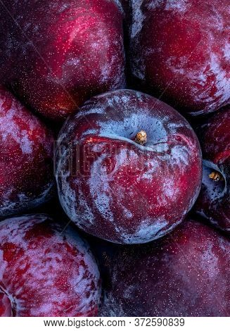 Ripe  Plum Fruits Background. Fresh Blue Plums Macro.