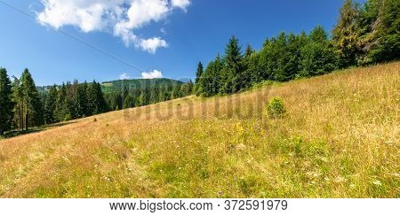 Meadows On The Hill Of Mountain In Summer. Idyllic Landscape On A Sunny Day. Beech And Spruce Trees