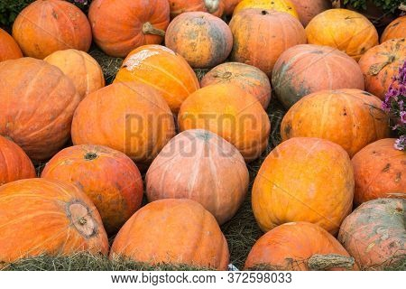 Pumpkin Varieties Yellow Almond On The Background Of Hay. Food, Vegetables, Agriculture, Healthy Foo