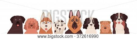 Portrait Group Of Funny Dogs Different Breeds Posing Together Vector Flat Illustration. Cute Colorfu