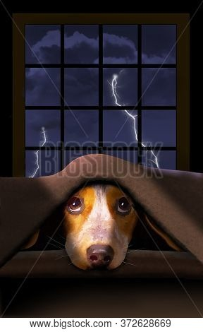 A Cute Little Beagle Dog Hides Under A Blanket As A Thunderstorm Rumbles Outside The Window Behind H