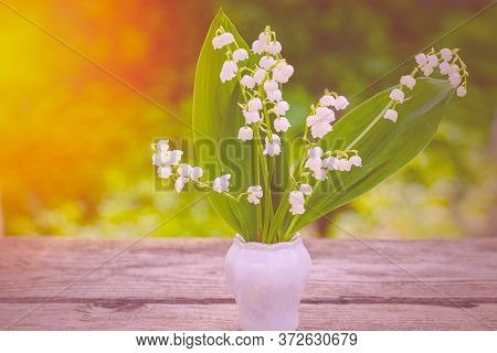 Spring Flower Lily Of The Valley. Lily Of The Valley. Flower Spring Sun White Green Background Horiz