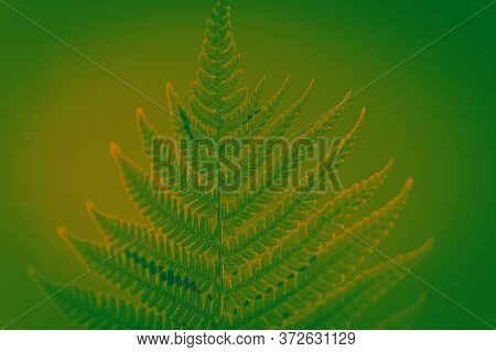 Green Leaf Of Fern In The Sun. Green Background For Advertising Wildlife. Fern Leaves Ecology Concep