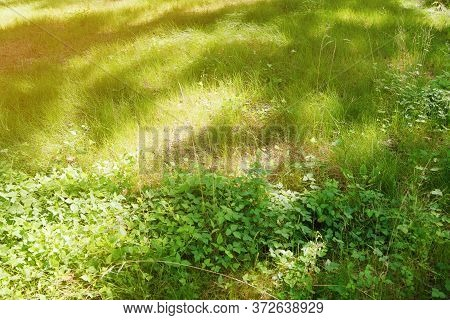 Green Lawn On A Sunny Summer Meadow.