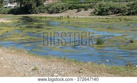 Scenic View Of Algae Green Shallow Rio Grande In Andalusia, Spain
