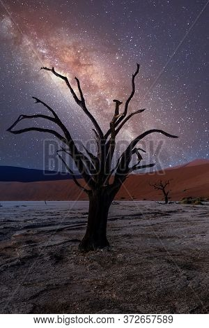 Acacia In Dead Vlei Landscape, Namib Desert, Dead Acacia Tree In Valley With Night Milky Way Sky, Na