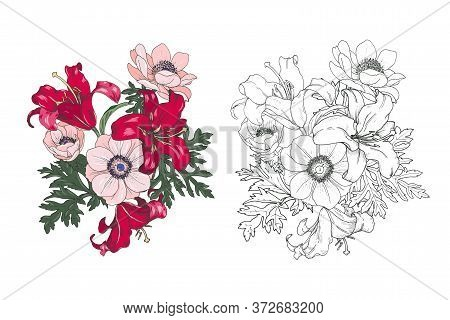 Lilies And Anemones In Color And Black And White, Garden Flower Arrangements, Set, Vector Illustrati