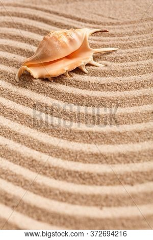 Beach Sand And One Large Seashell. Place For Text.